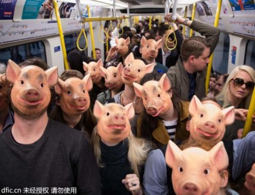 伦敦民众戴猪头出行 呼吁关注猪饲养环境